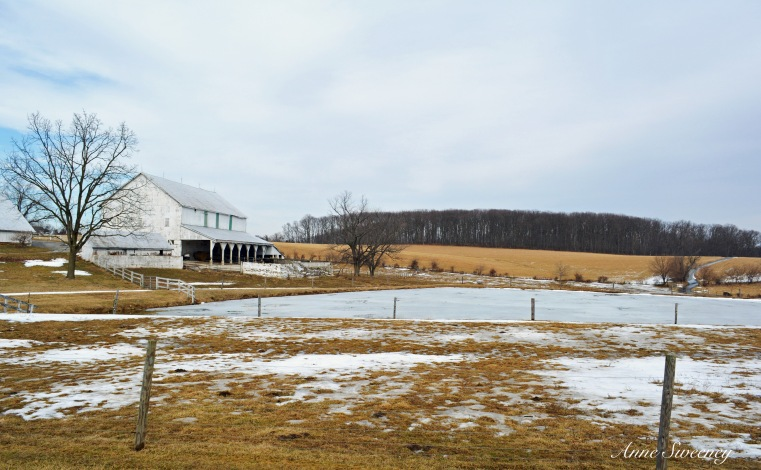 This farm was so awesome- all white buildings with no green scape yet. The pond still defrosting. I might go take another shot in the spring.