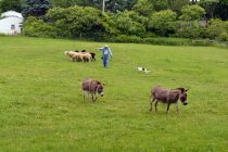 Loved the donkeys in the field during herding