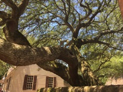 This tree was amazing